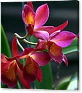 Ctna New River Orchid Canvas Print