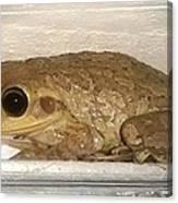 Cuban Tree Frog Canvas Print