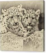 Cubs At Play Canvas Print