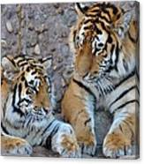 Cubs Canvas Print