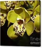 Cumbidium Orchid Canvas Print