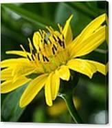 Cup Flower Canvas Print