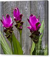 Curcuma Flowers Canvas Print