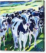Curiosity Cows Original Sold Prints Available Canvas Print