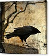 Curious Crow Canvas Print