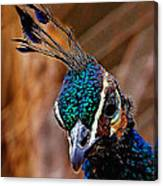 Curious Peacock Digital Art Canvas Print