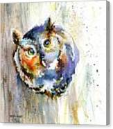 Curious Screech Owl Canvas Print