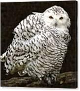 Curious Snowy Owl Canvas Print