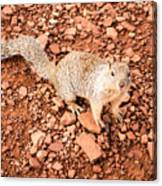 Curious Squirrel 2 Canvas Print