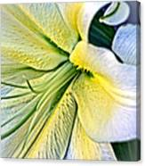 Curl Of A Lily Canvas Print