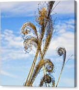 Curled Grasses Canvas Print