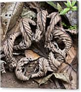 Curled Leaves Canvas Print