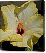Curlied Hibiscus Canvas Print