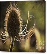 Curly And Spiky. Canvas Print