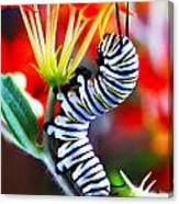 Curly Caterpiller Canvas Print