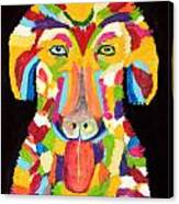 Curly Colorful Retriever Canvas Print
