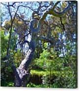 Curly Tree Canvas Print