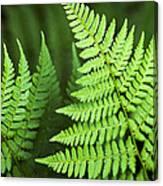 Curved Fern Leaf Canvas Print