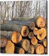 Cut Logs Canvas Print