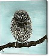 Cute Baby Owl Canvas Print