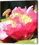 Cute Bee On Camellia Canvas Print