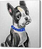 Boston Terrier Wall Art Canvas Print