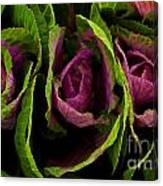 Cute Cabbage Canvas Print