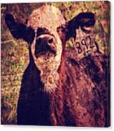 Cute Calf Grunge Canvas Print