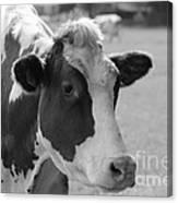 Cute Cow - Black And White Canvas Print