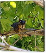 Cute Fuzzy Squirrel In Tree Canvas Print