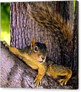 Cute Fuzzy Squirrel In Tree Near Garden Canvas Print