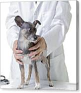 Cute Little Dog At The Vet Canvas Print