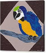 Cute Little Macaw  Canvas Print