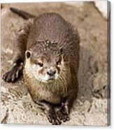 Cute Otter Portrait Canvas Print
