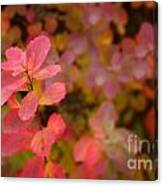 Cute Pink Plant Canvas Print