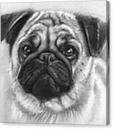 Cute Pug Canvas Print