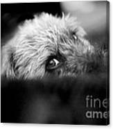 Cute Pup Sneek A Peek Canvas Print