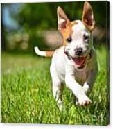Cute Stafford Puppy Running On Field Canvas Print