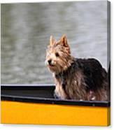 Cutest Dog Ever - Animal - 011342 Canvas Print