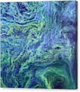 Cyanobacteria Bloom Canvas Print