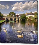 Cygnets At Christchurch  Canvas Print