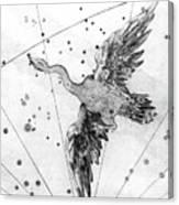Cygnus Constellation Canvas Print