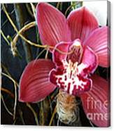 Cymbidium Flower Canvas Print
