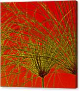 Cyperus Papyrus Abstract Canvas Print