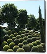 Cypress And Boxwood Garden Canvas Print