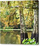 Cypress And Moss Canvas Print