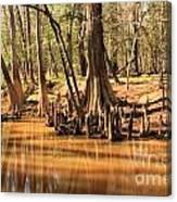 Cypress Arch Canvas Print