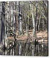 Cypress Bog Canvas Print