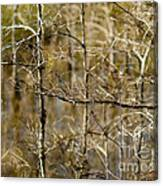 Cypress Branches Canvas Print