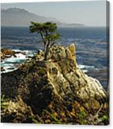 Cypress Canvas Print